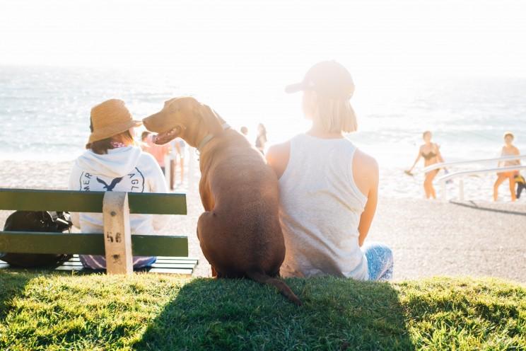 Novas regras para animais de estimação hoje em vigor!